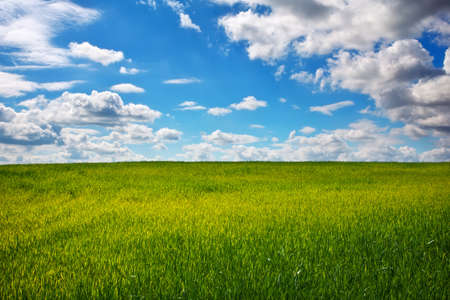 Green field and blue sky. Beatiful green field with blue sky. Stock Photo