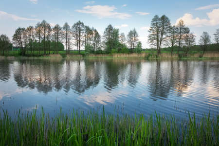 riverbank: Beautiful spring landscape with river, trees and blue sky. Composition of nature
