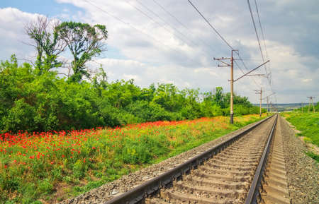 oldened: Rails of the railway among flowers and trees