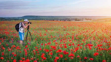 Photographer taking pictures of poppies in the field during sunset Stock Photo