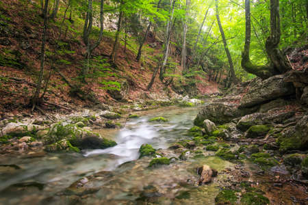 Mountain river in forest and mountain terrain. Crimea, the Grand Canyon. Nature composition. Stock Photo