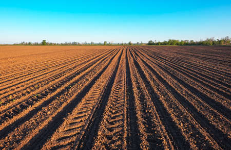 Preparing field for planting. Plowed soil  in spring time with blue sky. Stok Fotoğraf - 81806239