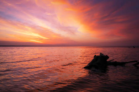 Beautiful spring landscape with sea coast, colorful sunset sky and log or snag.  Stok Fotoğraf