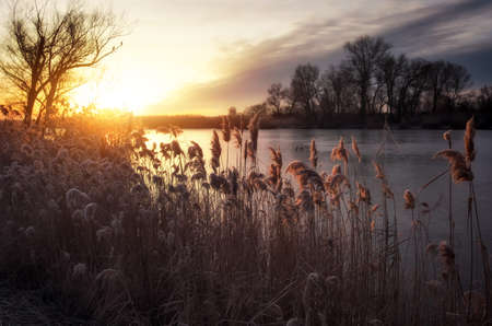 Beautiful winter landscape. The branches of the trees are covered with hoarfrost. Foggy morning sunrise. Colorful evening, bright sunshine over a river or lake. Stock Photo