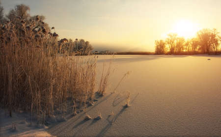 Beautiful winter landscape. The branches of the trees are covered with hoarfrost. Foggy morning sunrise. Colorful evening, bright sunshine over a river or lake. Foto de archivo