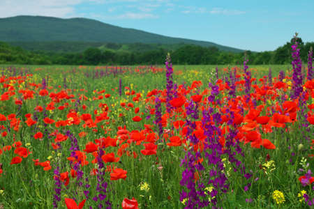 Spring flowers in field. Beautiful landscape. Composition of nature Stock Photo