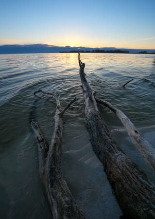 Dead wood in the sea at sunset. A snag on the sand of the beach 写真素材