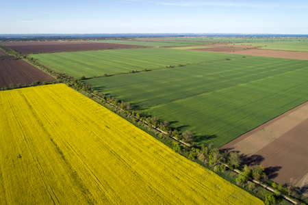 Yellow and green rape fields, aerial view. 写真素材