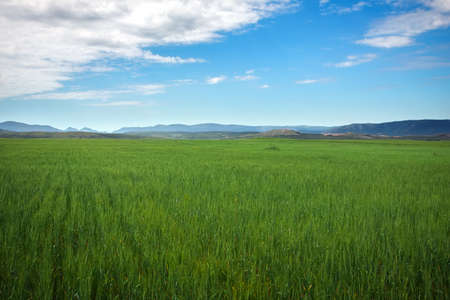 Beautiful spring landscape with green field and blue cloudy sky. 写真素材