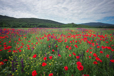 Spring flowers in field. Beautiful landscape. Composition of nature 写真素材
