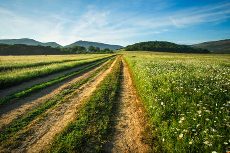 Landscape with dirt road between meadow in the spring. Agricultural, fields and mountain. 写真素材