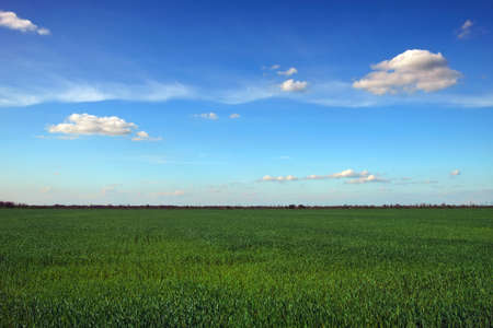 Beautiful landscape with an amazing blue cloudy sky and green grass
