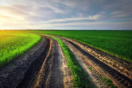 Landscape with dirt road between meadow early in spring. Agricultural, fields and pastures. Nature design