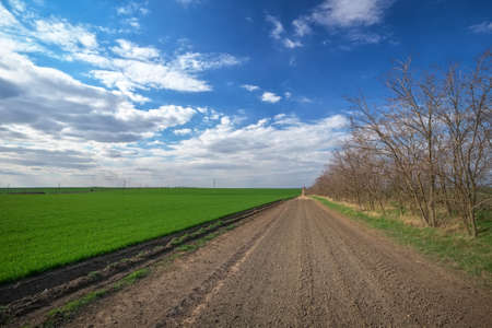 Spring landscape with the road, trees and green field. Blue cloudy sky