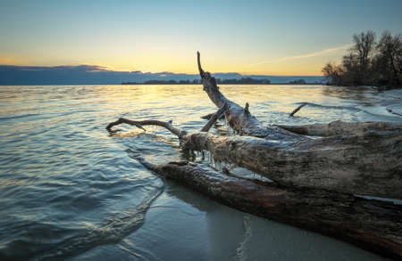 Dead wood in the sea at sunset. A snag on the sand of the beach Stock fotó