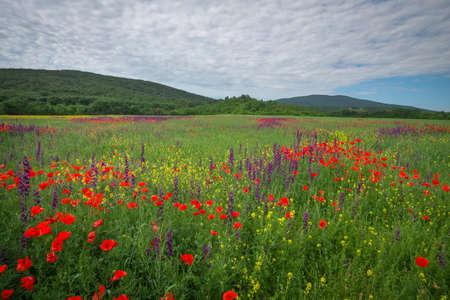 Spring flowers in field. Beautiful landscape. Composition of nature Imagens
