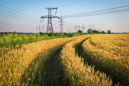 Pillars of line power electricity among the wheat fields with road