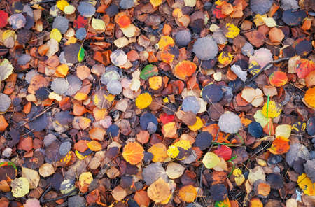 Background of colorful leaves. Autumn photo taken in the forest Stok Fotoğraf