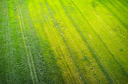 Natural grass texture. Aerial view of agricultural field