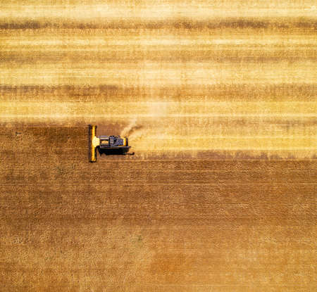 Aerial view of combine harvester harvesting wheat. Beautiful wheat field.
