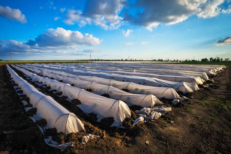 Beautiful landscape with greenhouses during sunset. Growing vegetables. Agricultureure