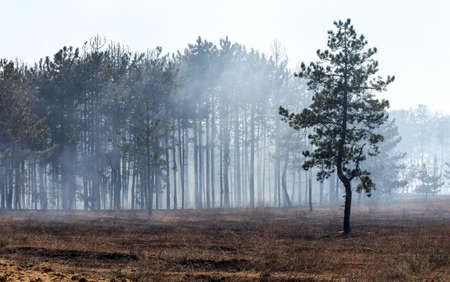 Burned forest, charred earth after the fire against the background of smoke and trees destruction landscape