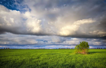 Lonely tree on a field with green young wheat. Beautiful landscape with dark rainy clouds. Composition of nature.
