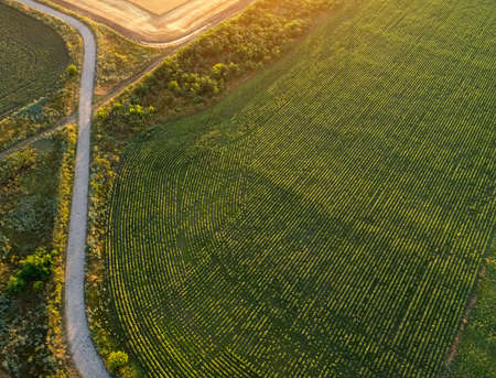 Road near the plantation and fields. Field during sunrise Imagens