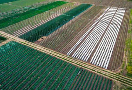 Aerial view of greenhouse and vegetables fields in small farming area. Agricultural field from above.