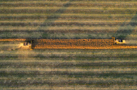 Aerial view of combine harvester harvesting wheat at sunset. Beautiful wheat field.
