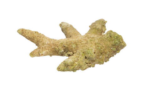 stony corals: Fossil of an old coral