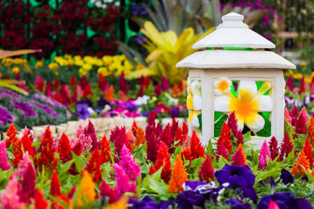 celosia: the celosia plumosa flower  Stock Photo
