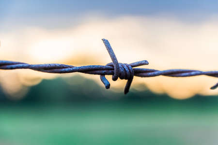 barbed wire fence: Close up of barbed wire during sunset