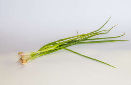 chive: Spring onions in isolated