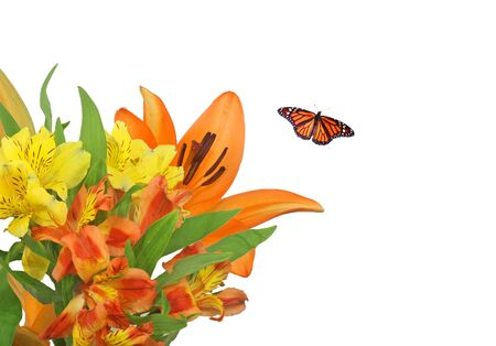 Monarch Butterfly with Bright Flowers