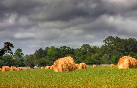 hay field: Campo di fieno con Storm Clouds scuro