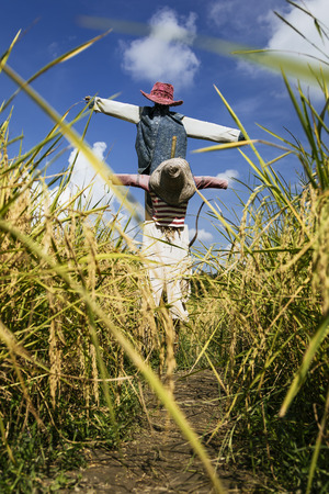 Scarecrow in field in Chiang Mai Thailand