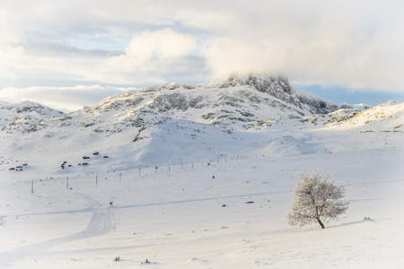 Snow covered tree and mountain in a white landscape in Beitostølen Norway