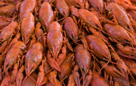Many red boiled crawfish on a tray photo