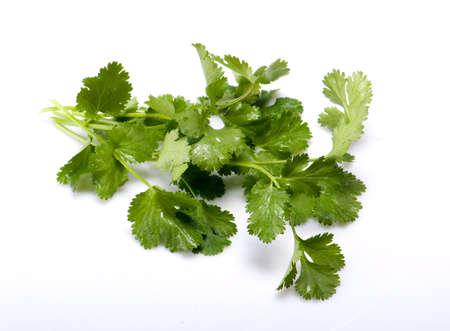 fresh cilantro isolated on white background