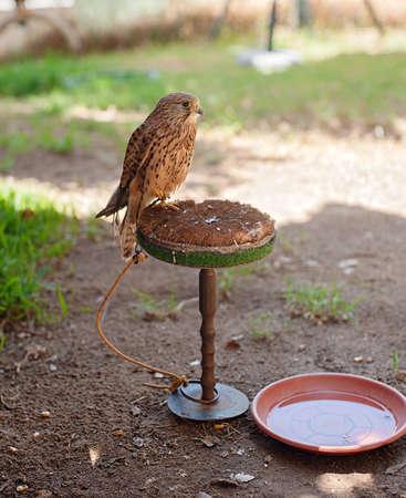 Owl in Zoo Banco de Imagens