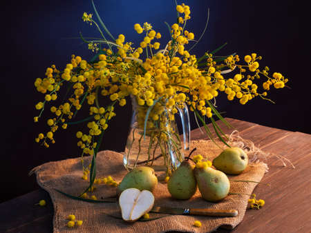 beautiful still life with mimosa on a blue background Stock Photo