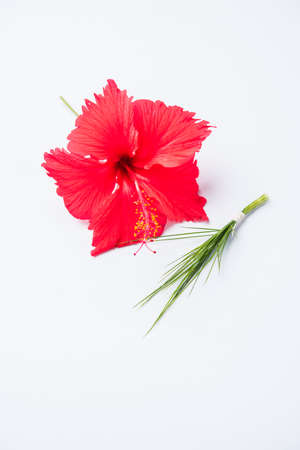 konkan: hibiscus flower or jasvand phool and durva or durva or green grass representing trishul armour, offered to lord Ganesha Stock Photo