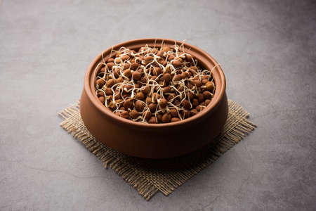 Sprouted Kala Chana or Black or brown Chickpeas - it's a vegan substitute for rich protein and it has high content of living enzymes Stock Photo