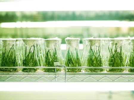 experiment: Laboratory Culture