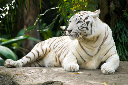 tigresa: Tigresa