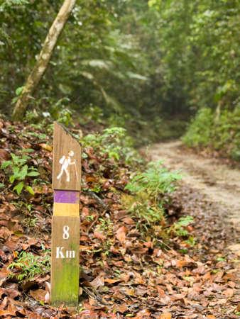 verdant: Hiking Trail in the Jungle
