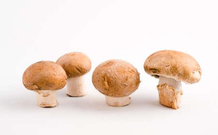 upright row: Row of Button Mushrooms