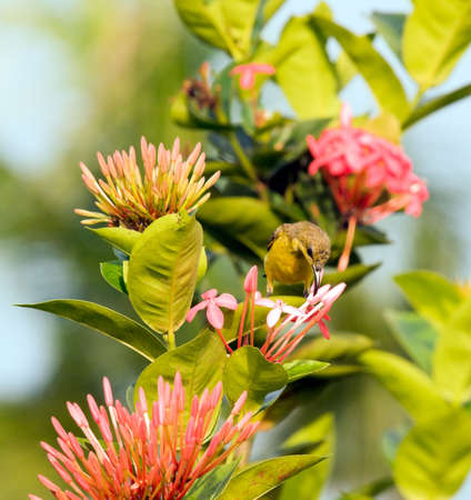 nectar: Sipping Nectar Stock Photo
