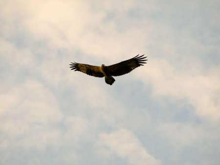 majesty: Eagle in Flight